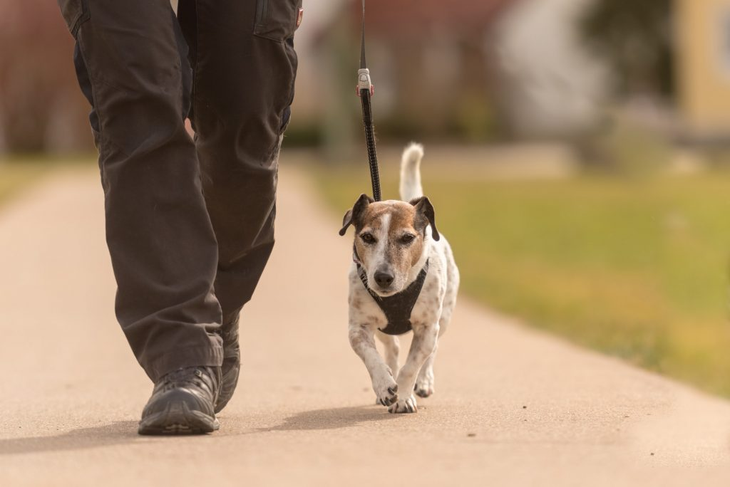 טיול עם הכלב - טוב לבריאות